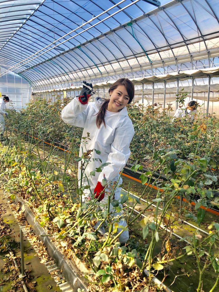 食べられるバラ栽培地での社員研修の様子をレポート