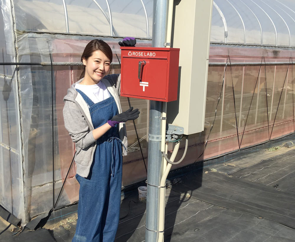 食べられるバラの栽培地レポートを埼玉県深谷市よりお届け! [ROSE LABO通信 Vol.3]