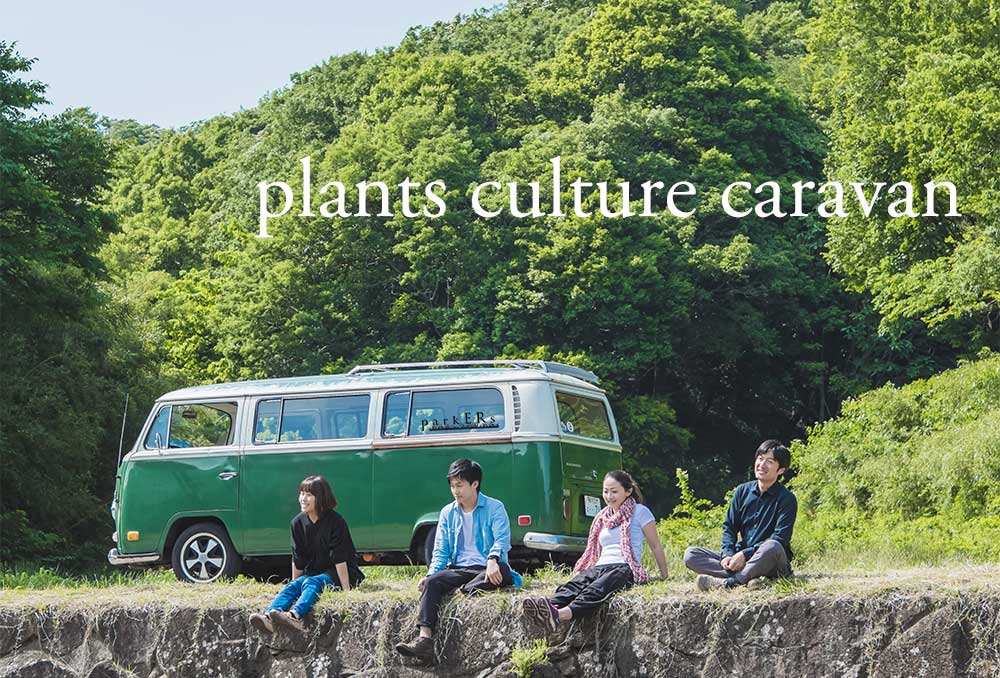 plants and cultures vol.6