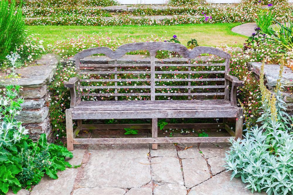 エリゲロンに囲まれたヘスタークームのベンチ
