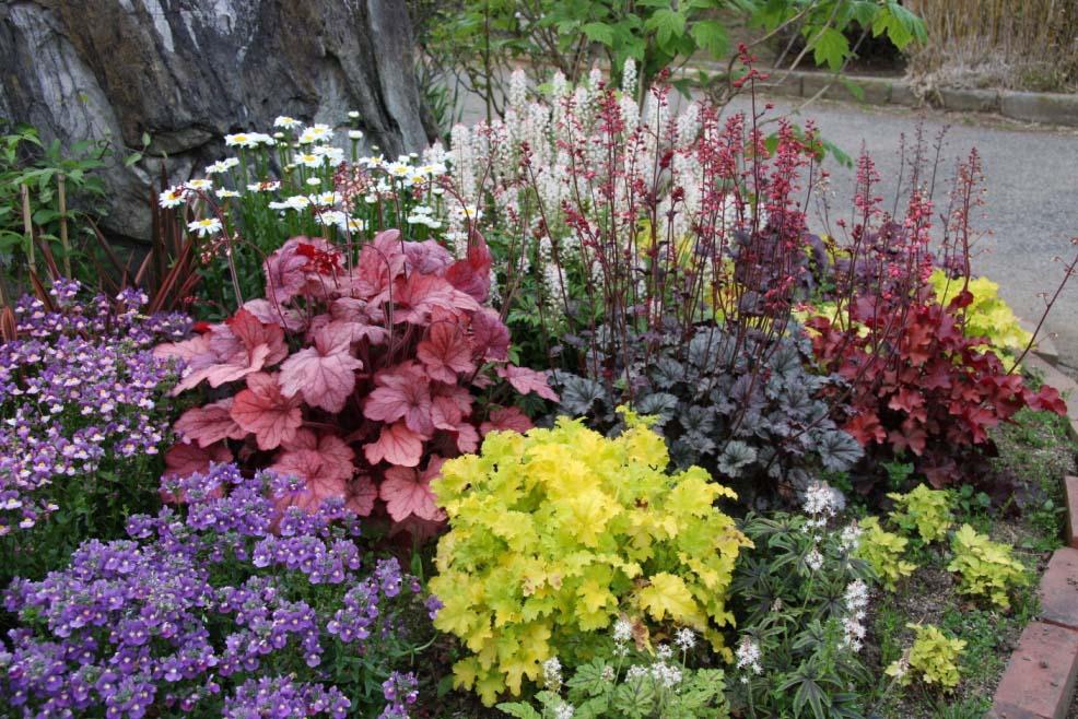 ヒューケラ'ライムリッキー'などのカラーリーフの花壇