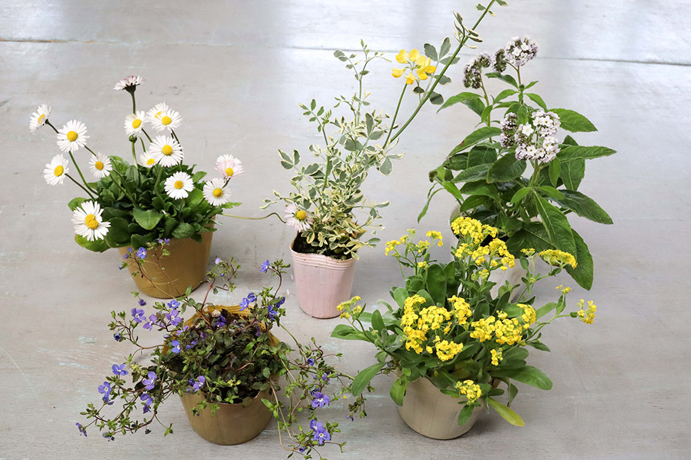 春の寄せ植えに使う花