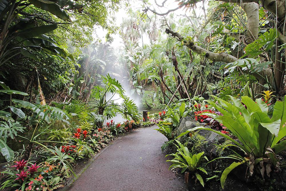 フラワーパークかごしま ジャングル花の谷