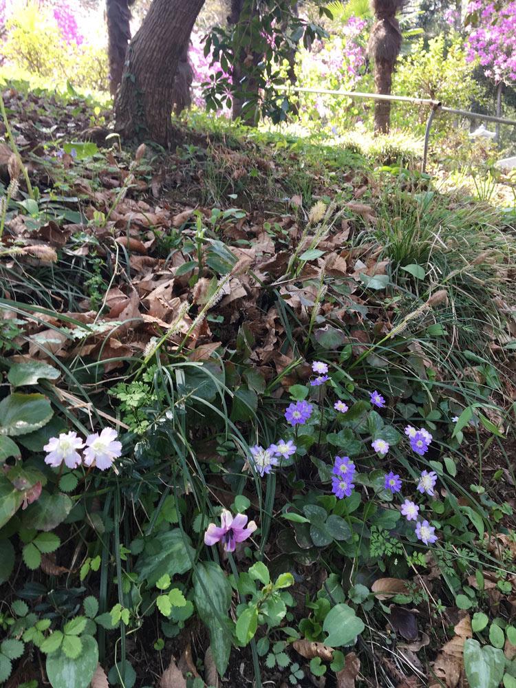 カタクリやユキワリソウなどが咲く
