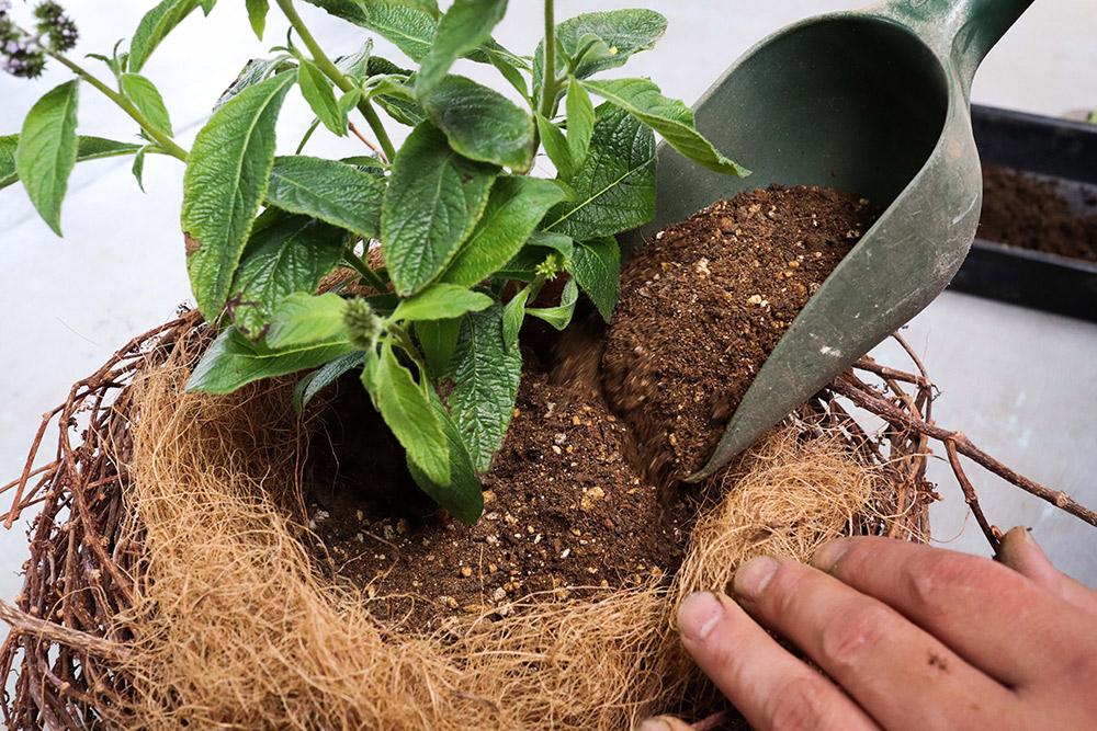 苗を入れて土を足す