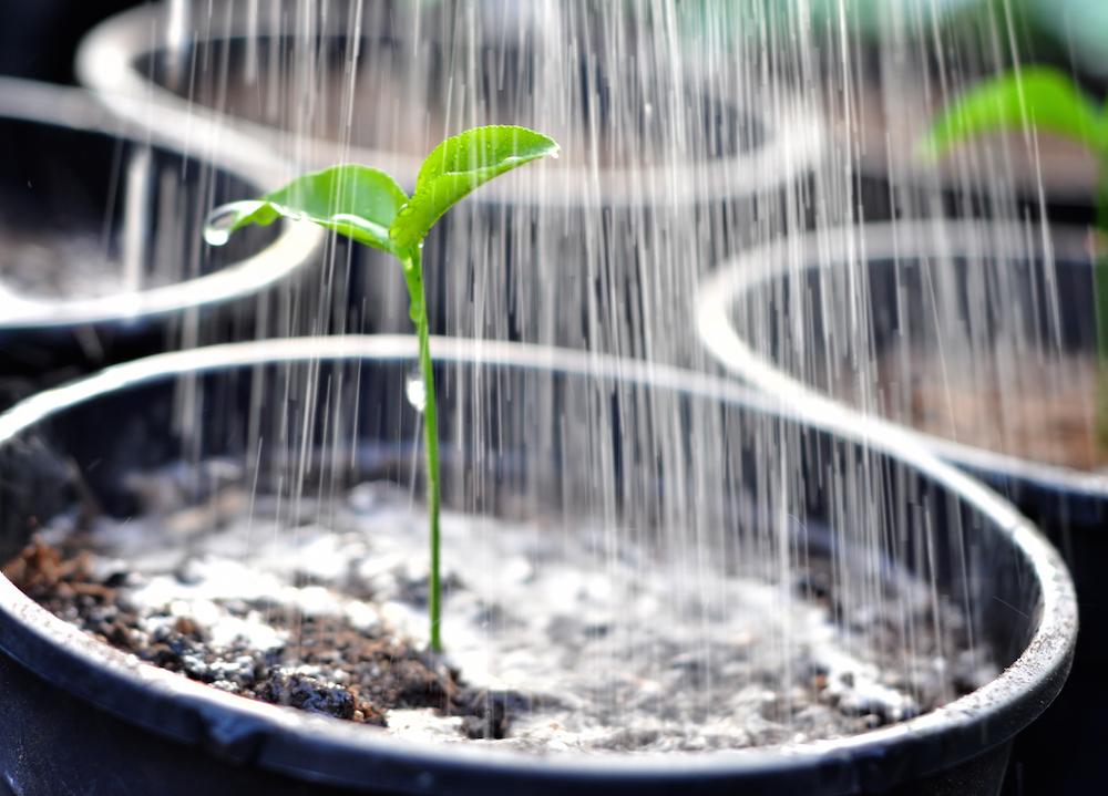 植え替え後の水やり
