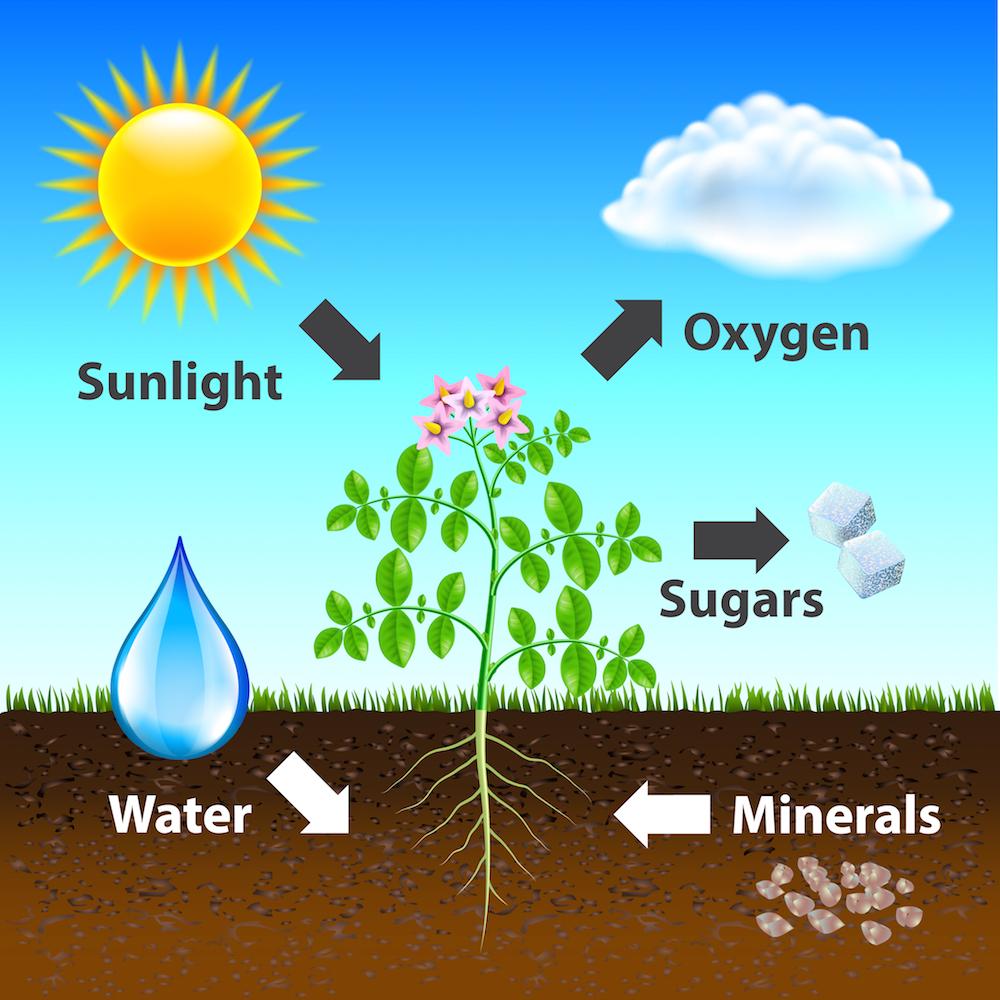 植物と光合成