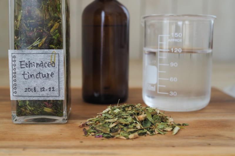 風邪予防にハーブのチカラを! エキナセアチンキ液の作り方