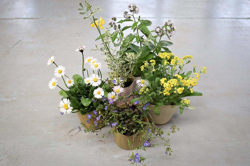 春の寄せ植えの作り方