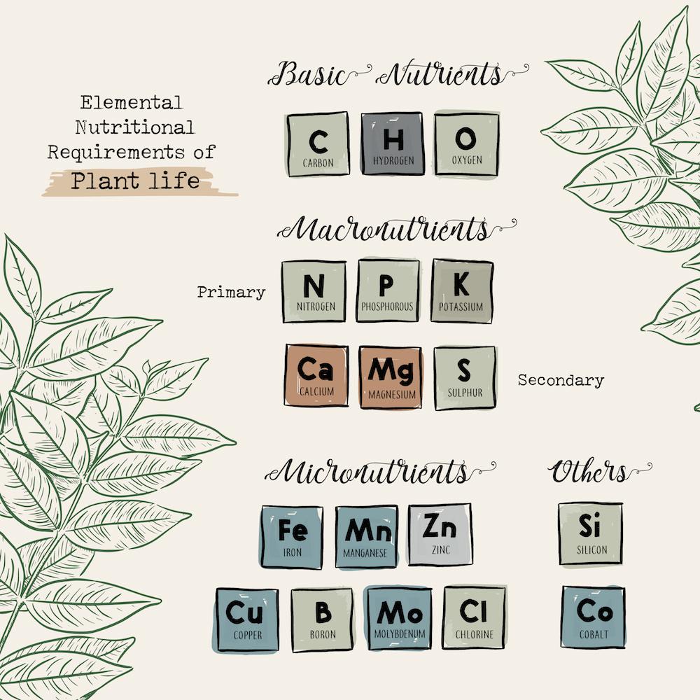 植物に必要な基本元素