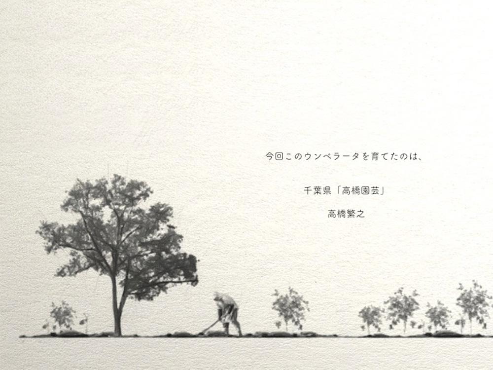 今回このウンベラータを育てたのは、千葉県「高橋園芸」高橋繁之