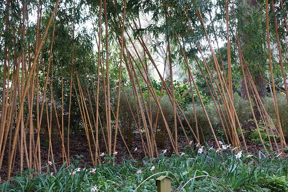 コンプトン・エーカーズの日本庭園