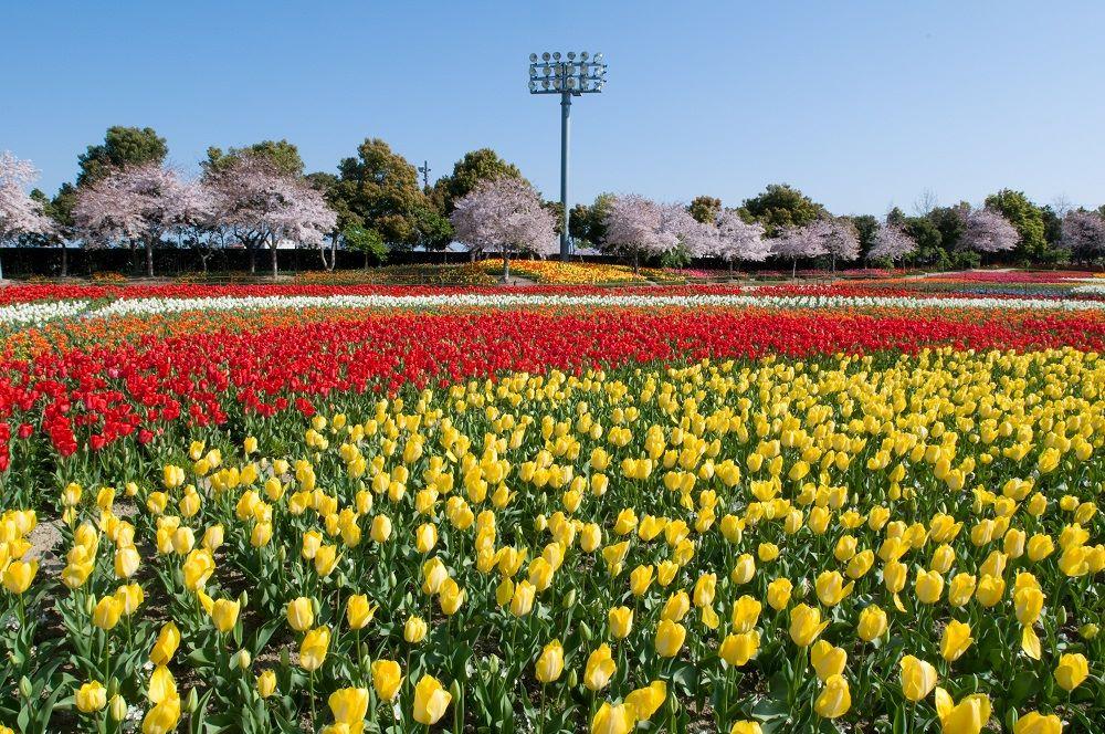 花と緑と食のテーマパーク なばなの里
