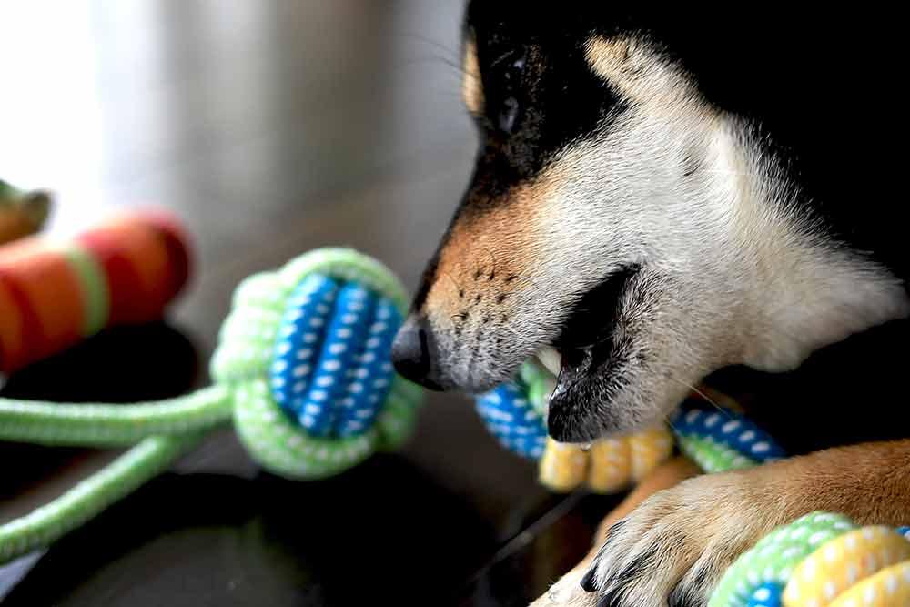 犬の歯磨きおもちゃ