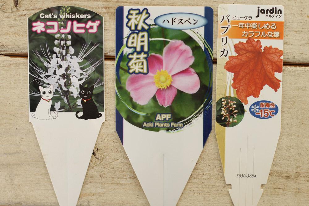 植物を買う際には、ついている名前の札をよく見ることが重要
