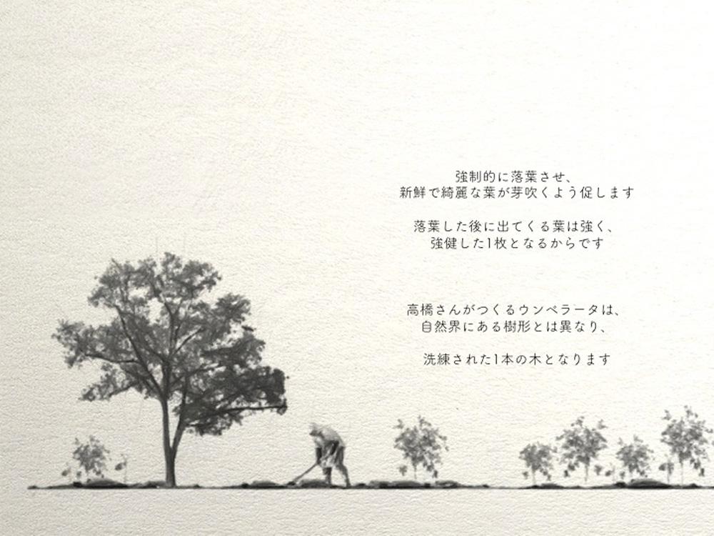 高橋さんがつくるウンベラータは、自然界にある樹形とは異なり、洗練された1本の木
