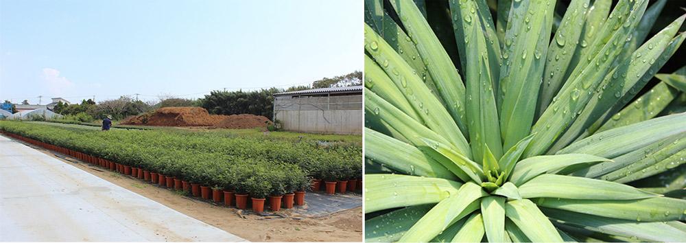 ウンベラータ以外にも、20品種以上の植物を扱っています