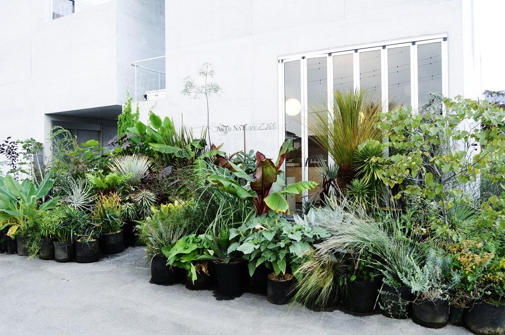 「ACID NATURE 乙庭」の店頭植栽