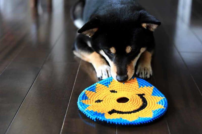犬の手作りデンタルケア