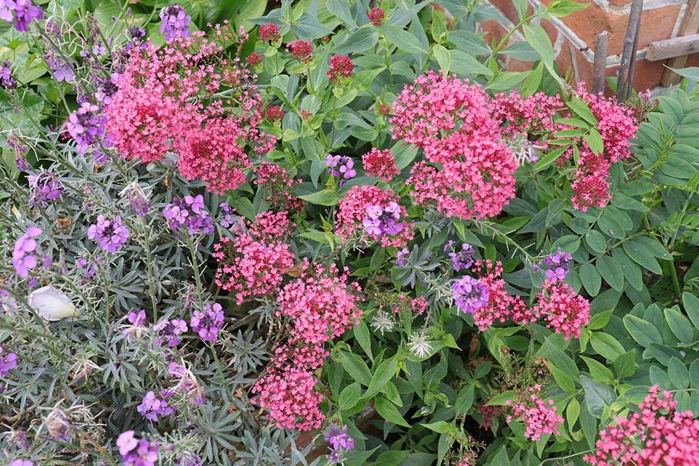 アプトン・グレイの花々