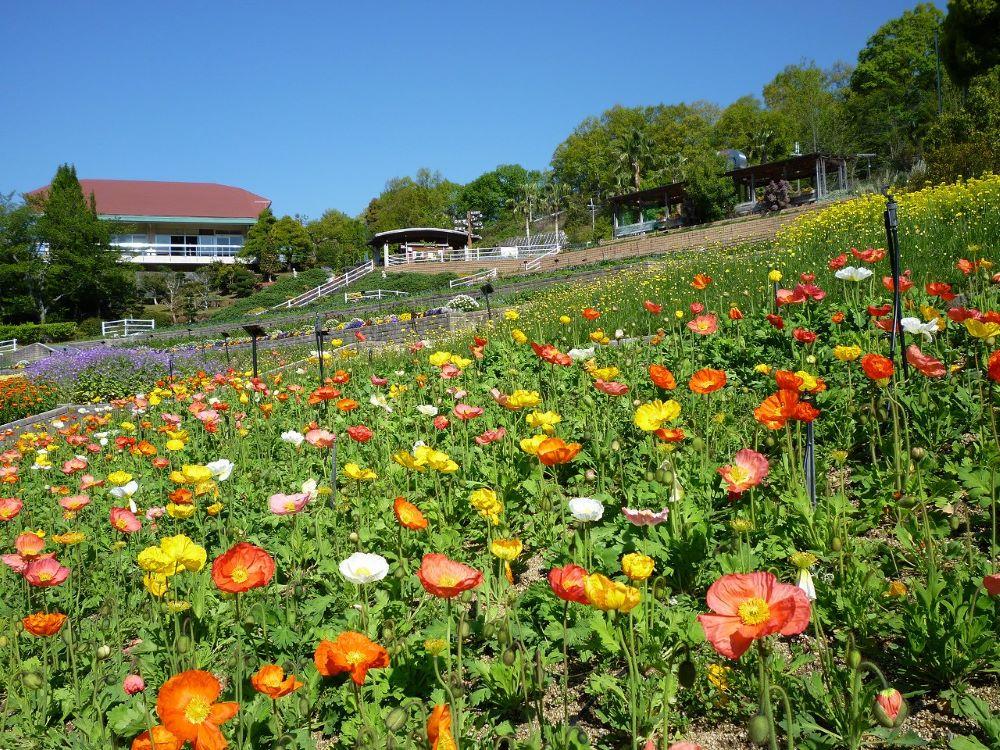 和歌山県植物公園 緑花センター