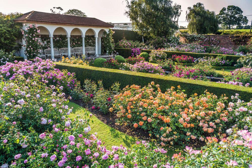 デビッド・オースチン ルネッサンス ガーデン