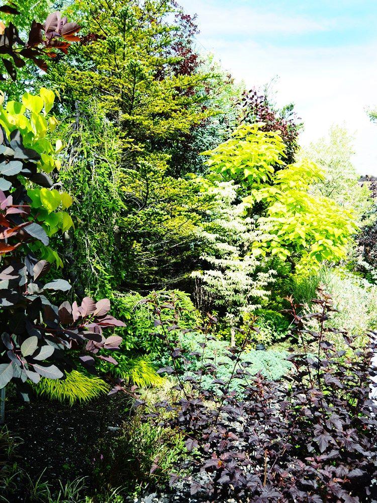 カラーリーフ樹木を取り入れた植栽