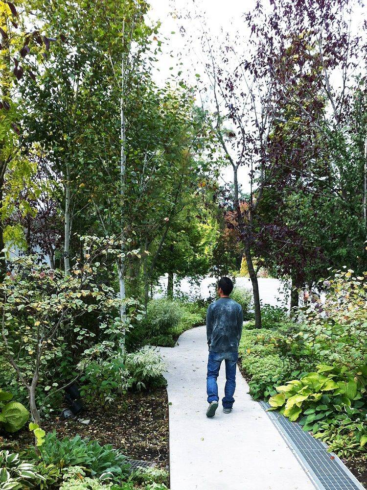カラーリーフ植栽の秋
