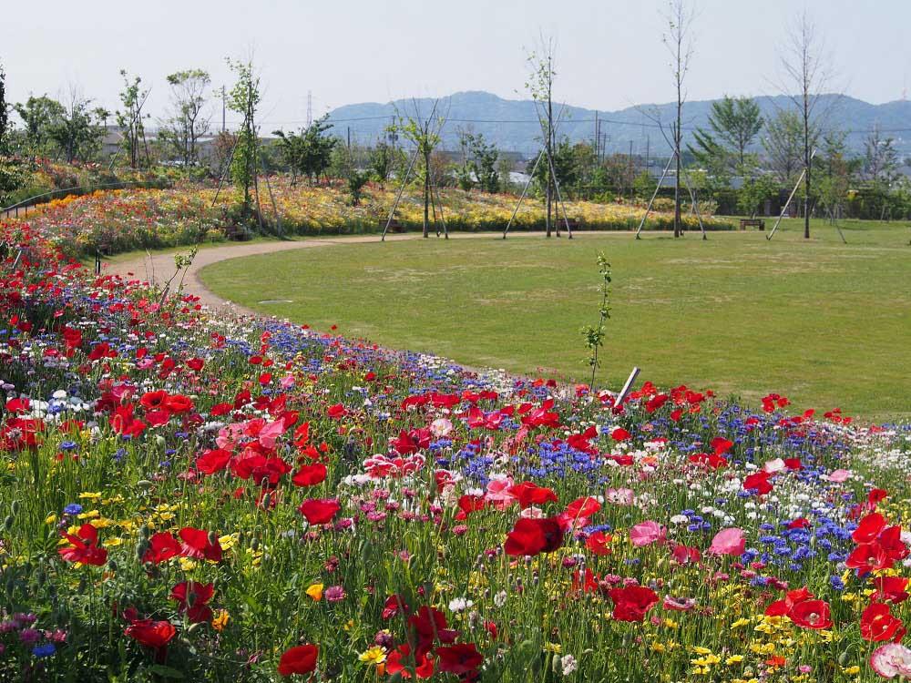 花菜ガーデン 三日月山パノラマ大花壇