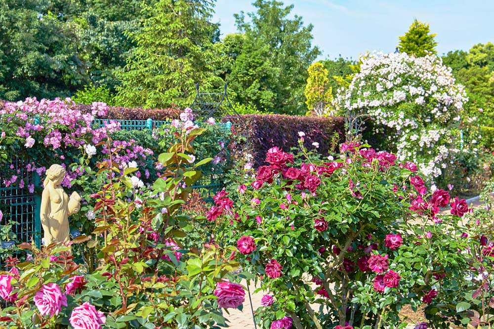 花菜ガーデンのバラ園