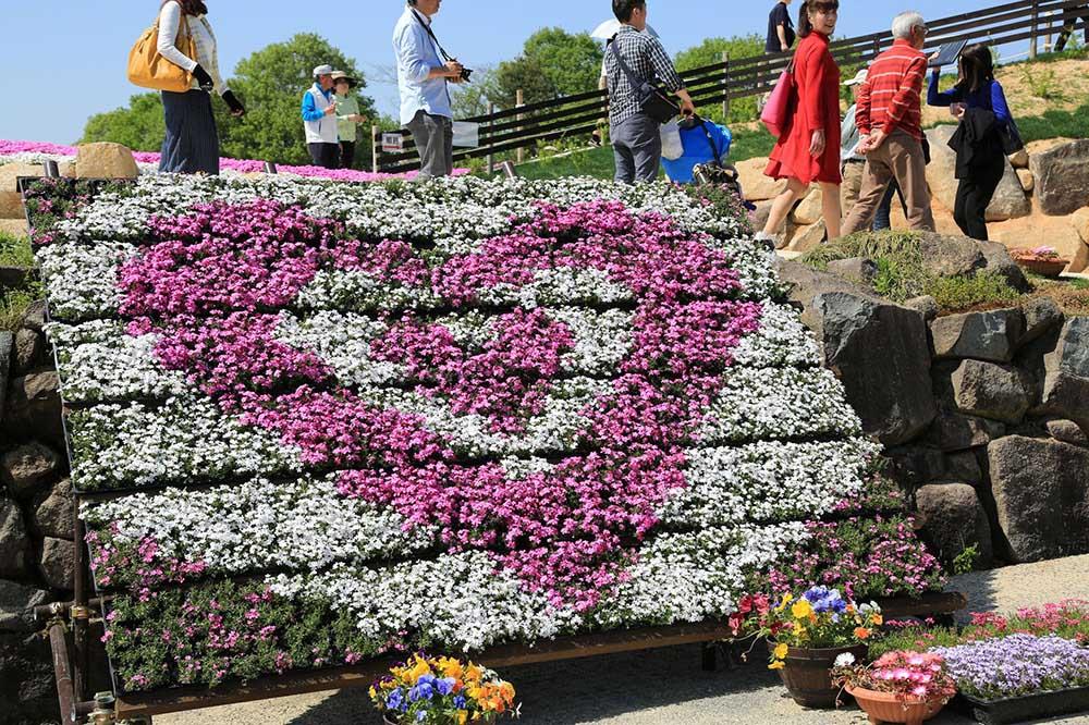 「Flower village 花夢の里」芝ザクラウォール