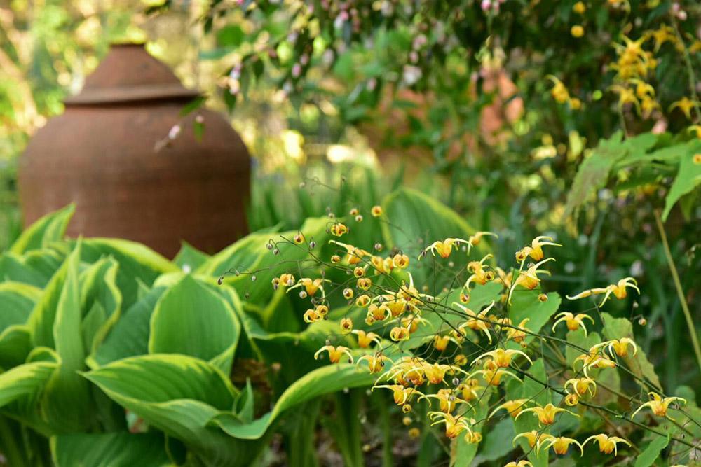 ガーデンショップ「フェアリーガーデン」のギボウシとポット