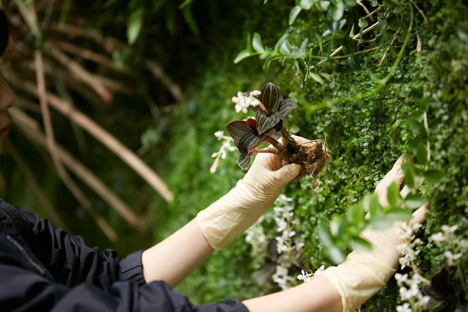 室内緑化の生態系とは 〜人の手と想いが支える共生の未来〜