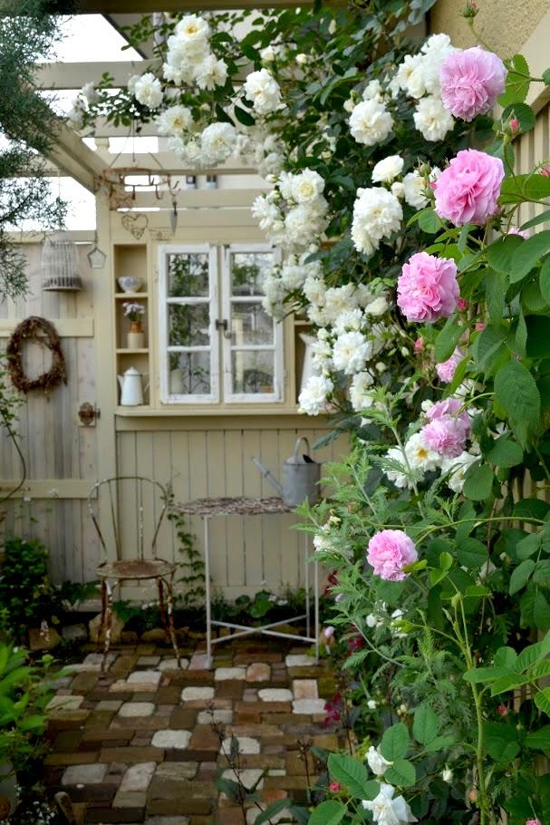 パーゴラに咲くつるバラ