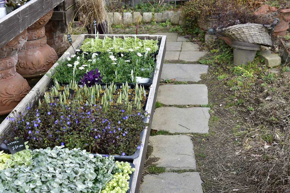 ガーデンショップ「フェアリーガーデン」の宿根草苗