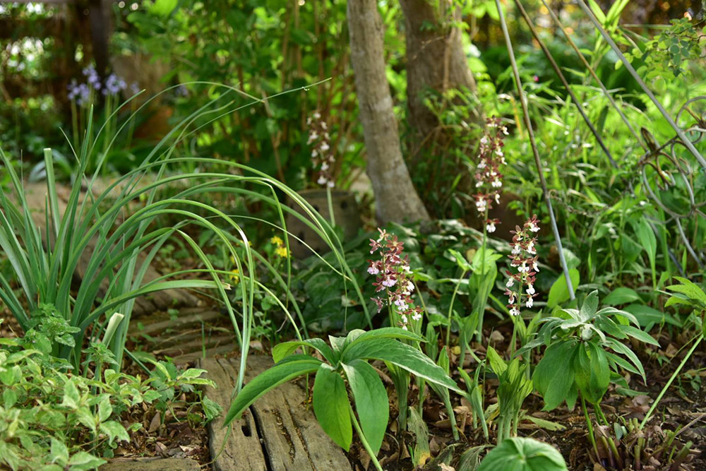 ガーデンショップ「フェアリーガーデン」の山野草