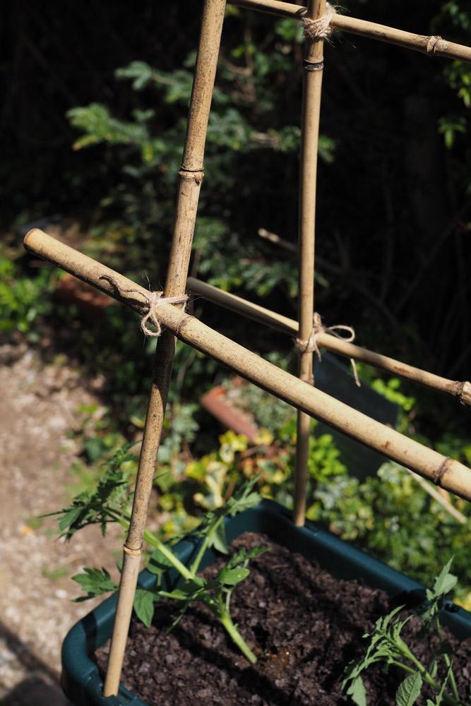 支柱を立てて…誘引の仕方 植えつけたらすぐに支柱を立てておきましょう。