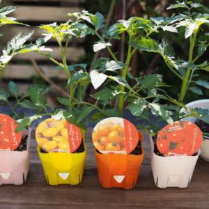 プランターで育てよう!ミニトマトの栽培方法【植え付け編】