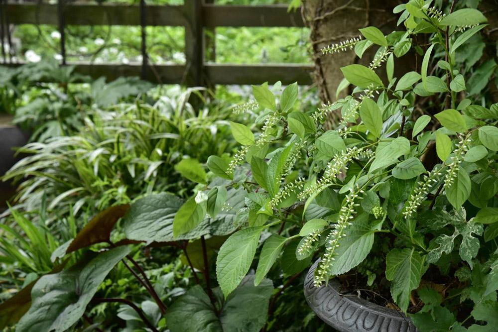 ガーデンショップ「フェアリーガーデン」のリーフと灌木の植栽