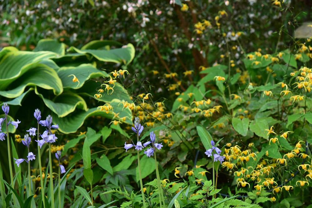 庭演出で注目の植物「リーフ×宿根草×球根」