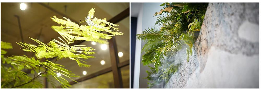 植物の育成と、過ごす人への影響を配慮した照明計画(左)。ミスト(霧)を吹きだし葉の湿度を保つ設備も取り入れる(右)。