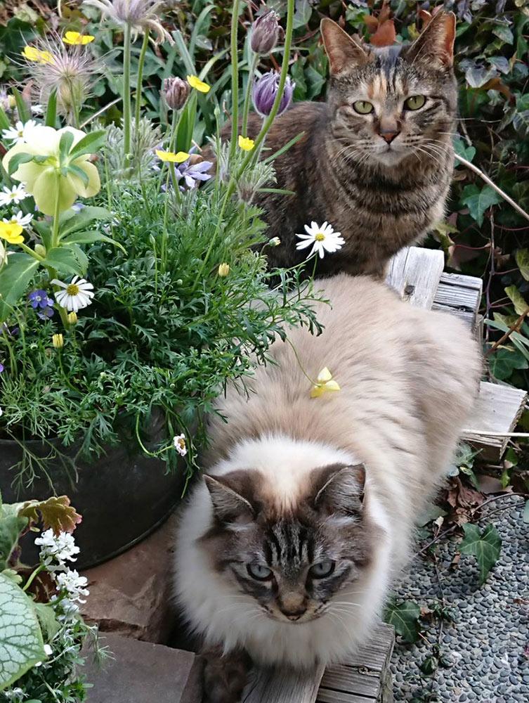 ガーデンショップ「フェアリーガーデン」の猫たち