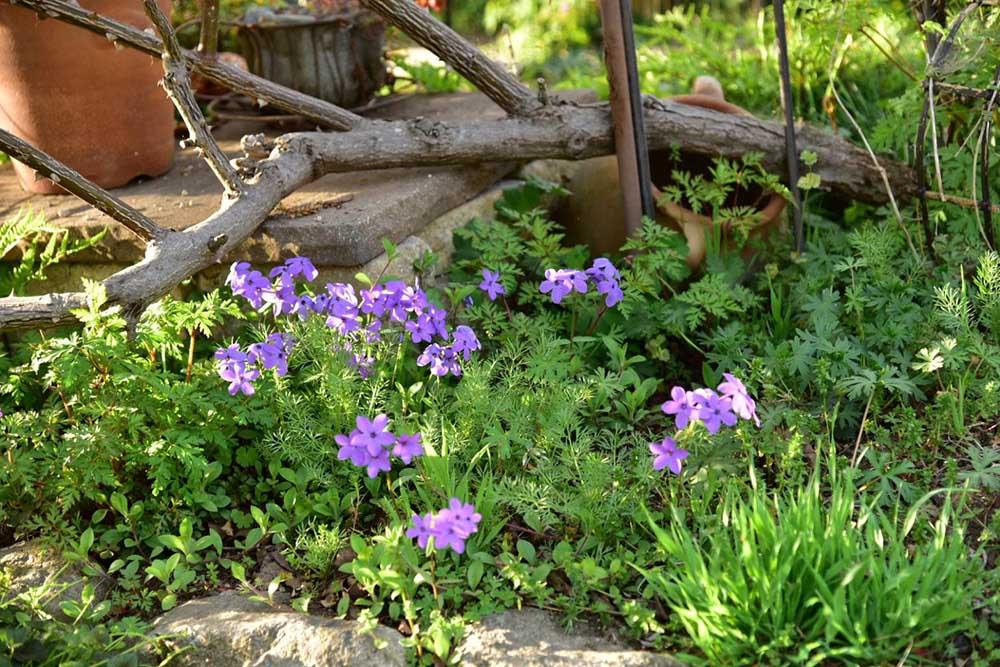 ガーデンショップ「フェアリーガーデン」の宿根草