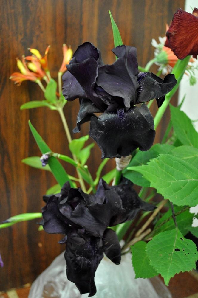 黒花のジャーマンアイリスジャーマンアイリス