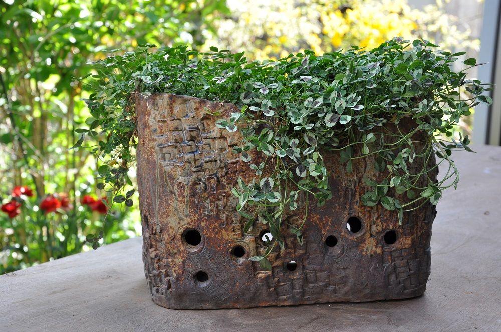 クローバーが植わるバスケット型の鉢