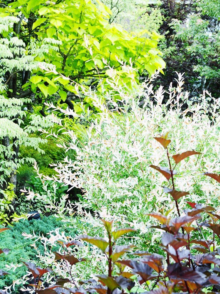 カラーリーフ落葉樹を使った植栽