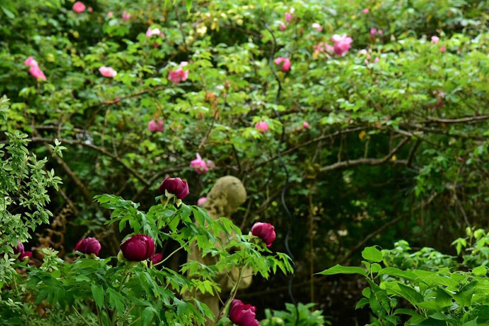 ガーデンショップ「フェアリーガーデン」の庭