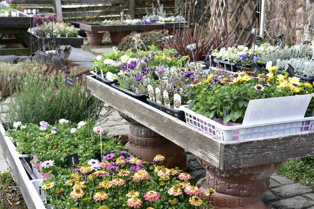ガーデンショップ「フェアリーガーデン」の花苗
