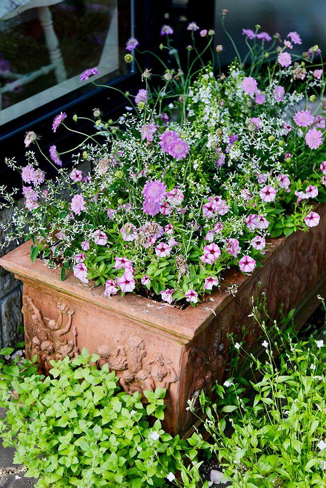 ピンクの花の寄せ植え