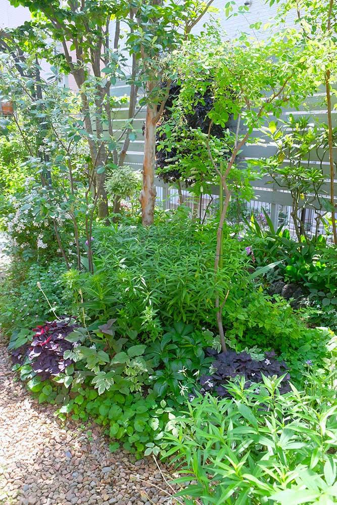 林の中のような庭